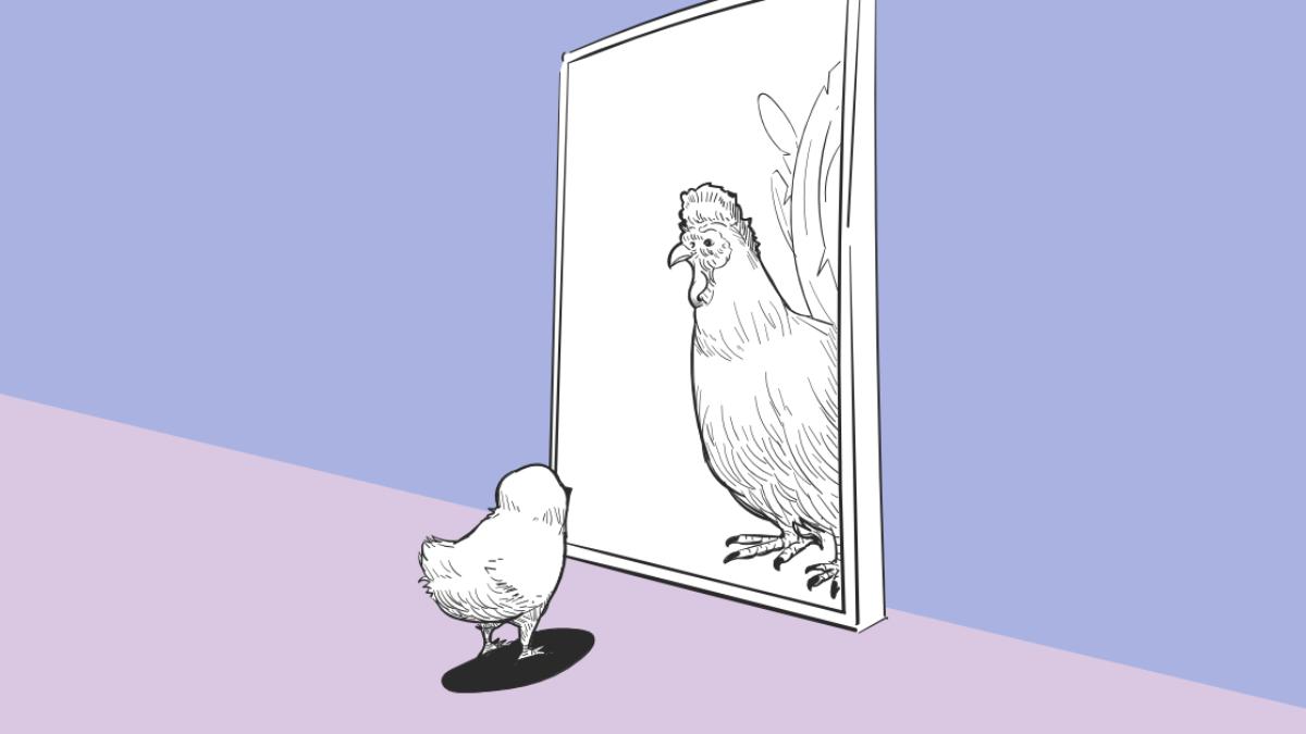 Chicken looking into mirror
